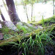 Gåshaga-gamla-sommarstogeområde-trappa-till-bryggan